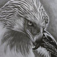Aguila monera