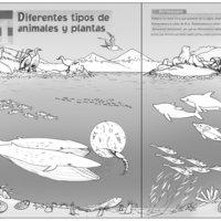 Fauna de Chiloé. Ilustración digital infantil.(incluyo boceto)