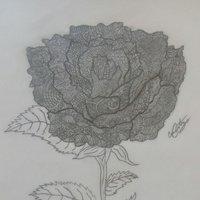 My black rose