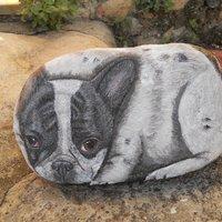 bulldog frances sobre piedra