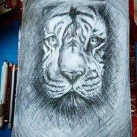 Tigre en lápiz carboncillo