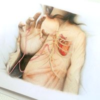 The heartlines on your hand