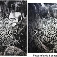 Dibujo vs. Fotografía