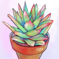 Cactus y suculentas 3