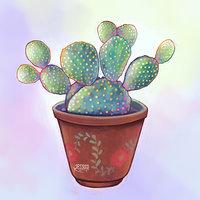 Cactus y suculentas 4