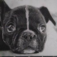 Dibujo cachorro en proceso