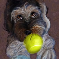 Retrato Mascota - Stella Artois