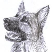perro a carboncillo