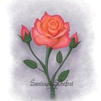 La típica rosa de toda la vida :)