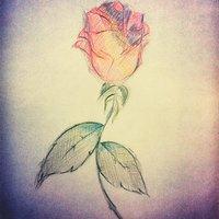 Boceto Rosa a color