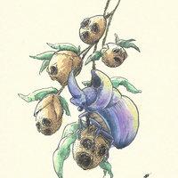 Escarabajo con snapdragons