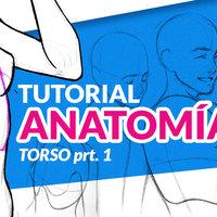 Cómo dibujar anatomía | Torso parte 1