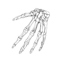 Huesos de la mano.