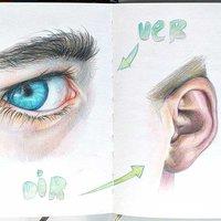 Practicando: Anatomía
