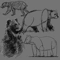 Practica de un oso