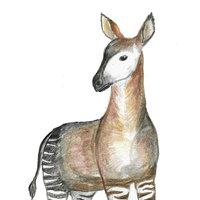 Dibujo tradicional a lapiz de colores // OKAPI