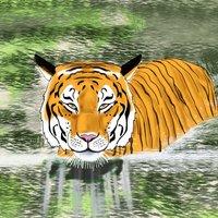 La mirada del tigre