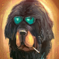 Perro Cool