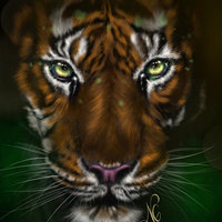 Tiger, Wild Animal