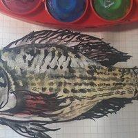 ilustrando peces:oreochromis