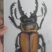Escarabajo marron y de grandes tenazas