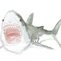 tiburon en acuarela