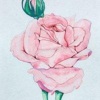 Rosa acuarela