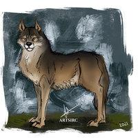 Sketch lobo