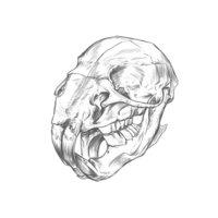 Rat skull Drawing.