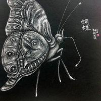 Chou、蝶