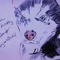 Bombón the husky