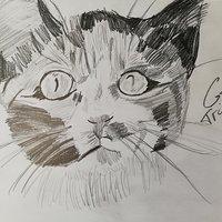 Gato con lápiz y goma moldeable