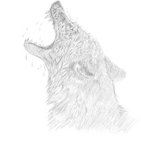 Lobo luc