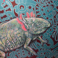 Axolotl, Ajolote