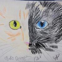 Gato quimera