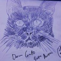 Don gato