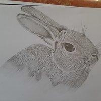 Medio conejo