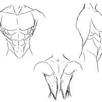Practica de musculatura masculina