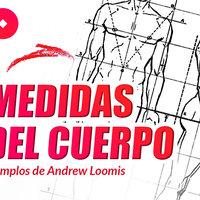 Medidas del cuerpo humano | Ejemplos de Andrew Loomis