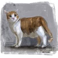 Color study: gato