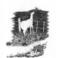ilustraciones en bolígrafo