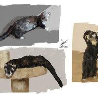 sketch study - Hurones