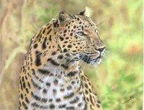leopardo_35521.jpg