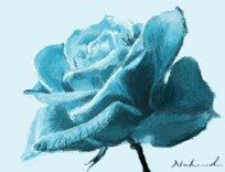 rosa_celeste_46308.jpg