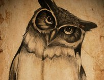 owl_61406.jpg