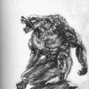 Werewolf_4794.jpg