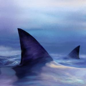 Sharks_5131_0.jpg