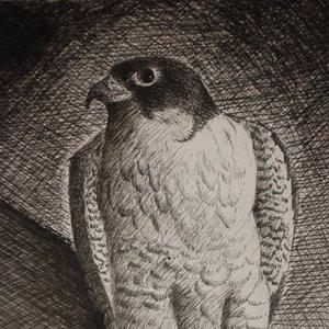 falcon_8502.jpg