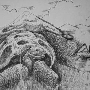 turtle_8546.jpg