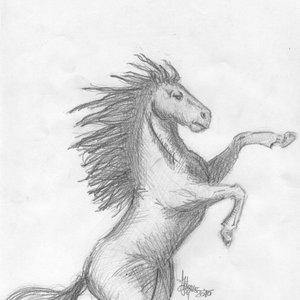 Anatomia_del_caballo_8597.JPG